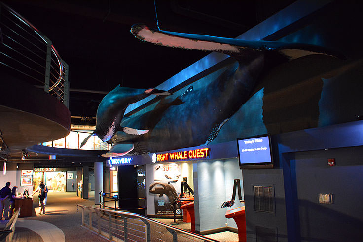 Lifesize whales at the N.C. Aquarium at Fort Fisher