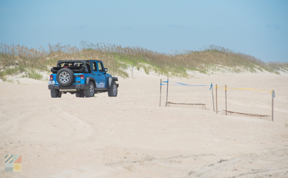 A Jeep drives around some sea turtle nests at the Fort Fisher NC 4x4 area