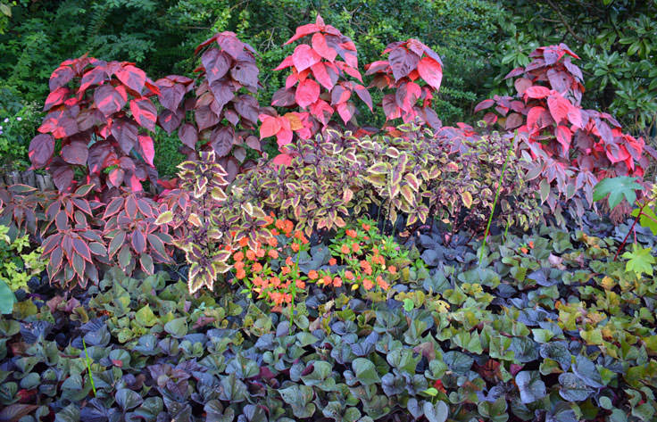 New Hanover County Arboretum is colorful year-round